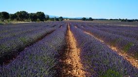 Lavendelfält, sommarlandskap nära Brihuega, Guadalajara, Spanien royaltyfri fotografi