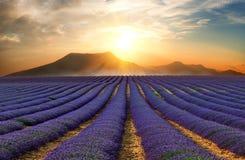 Lavendelfältet 10 Royaltyfria Bilder
