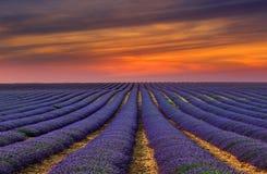 Lavendelfältet 7 Royaltyfria Foton
