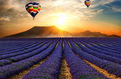Lavendelfältet 5 Arkivbilder
