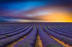 Lavendelfältet 4 Royaltyfria Bilder