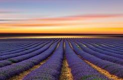 Lavendelfältet 3 Royaltyfria Bilder