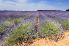 Lavendelfältet och fördärvar Royaltyfri Foto