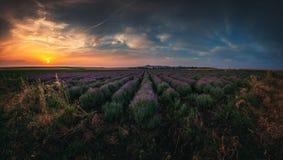 Lavendelfeld bei Sonnenuntergang Blühende duftende Felder der Lavendelblume in den endlosen Reihen Lizenzfreie Stockfotos