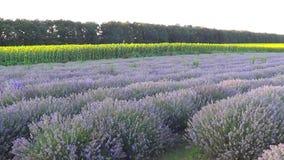 Lavendelfeld, Bulgarien stock video footage
