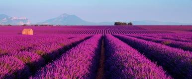 Lavendelfeld im Süden von Frankreich stockfoto