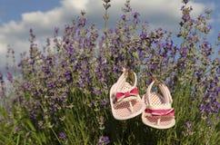 Lavendelfeld im Sommer Stockbilder