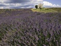 Lavendelfeld mit Kapelle in Süden-Frankreich lizenzfreies stockfoto