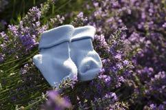 Lavendelfeld mit Socken des blauen Babys Lizenzfreies Stockfoto