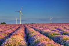 Lavendelfeld mit Windkraftanlagen, Bulgarien Stockbild