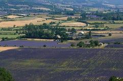 Lavendelfeld Provence Stockfotografie