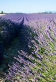 Lavendelfeld in Provence Lizenzfreies Stockfoto