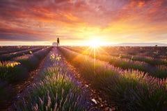 Lavendelfeld in Provence Lizenzfreie Stockbilder