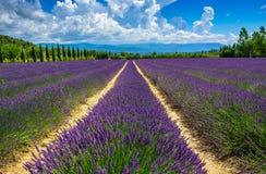 Lavendelfeld in Provence Stockfotografie