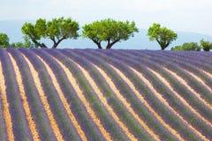 Lavendelfeld in Provence, Frankreich Lizenzfreies Stockfoto