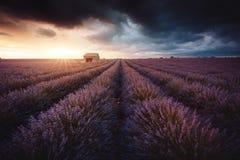 Lavendelfeld in Provence, Frankreich stockbild