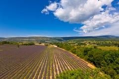 Lavendelfeld in Provence, Frankreich Lizenzfreie Stockfotos