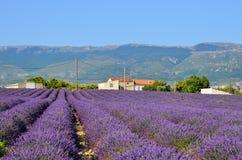 Lavendelfeld in Provence, Frankreich Lizenzfreie Stockfotografie