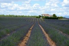 Lavendelfeld in Provence, Frankreich stockfoto