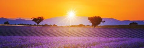 Lavendelfeld Sommer-Sonnenunterganglandschaft Stockfoto