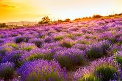 Lavendelfeld in Tihany, Ungarn Lizenzfreies Stockbild