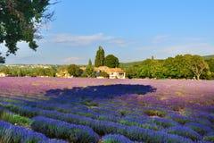 Lavendelfeld und altes Bauernhaus, Provence, Frankreich Stockfotos