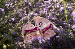 Lavendelfeld- und -Babyschuhe auf einem Stamm Stockfoto
