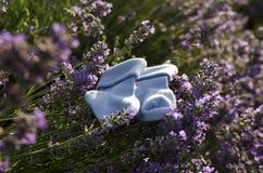 Lavendelfeld- und -Babysocken auf einem Stamm Stockfotos