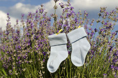 Lavendelfeld- und -babysocken mit gelben Klammern Stockfotos