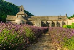 Lavendelfeld und Senanque-Abtei, Provence, Frankreich Stockbild