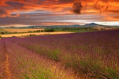 Lavendelfeld während des Sonnenuntergangs Lizenzfreie Stockbilder