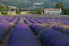 Lavendelfeldbauernhaus Stockbild