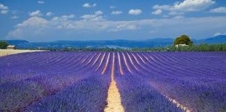 Lavendelfelder Lizenzfreie Stockfotografie