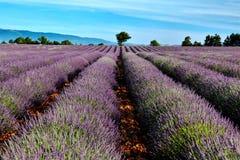 Lavendelfelder Lizenzfreies Stockbild