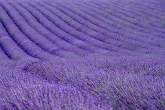 Lavendelfelder Lizenzfreie Stockfotos