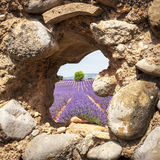 Lavendelfelder durch ein Kabinenfenster in Valensole Lizenzfreies Stockbild