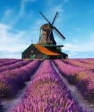 Lavendelfelder mit Windmühle stockfotos