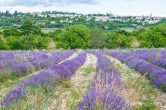 Lavendelfelder nahe Valensole in Provence, Frankreich Stockbilder