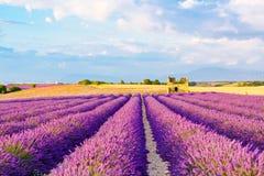 Lavendelfelder nahe Valensole in Provence, Frankreich Stockfotografie