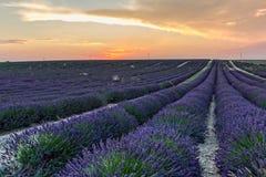 Lavendelfelder am Sonnenuntergang Stockbild