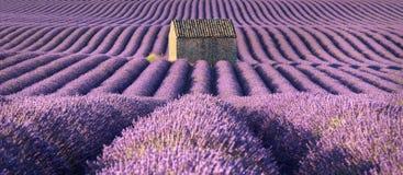 Lavendelfelder in Valensole mit Steinhaus im Sommer Albes-De-Haute-Provence, Frankreich stockbild