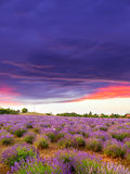 Lavendelfeldsommer Lizenzfreie Stockfotos