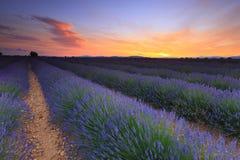 Lavendelfeldsonnenuntergang stockfoto