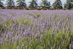 Lavendelfestival på lantgård 123 Royaltyfri Fotografi