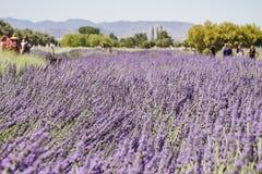 Lavendelfestival på lantgård 123 Royaltyfri Foto
