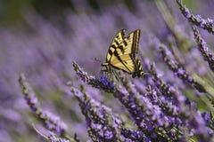 Lavendelfestival på lantgård 123 Royaltyfria Bilder