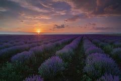 Lavendelfileld på solnedgången, nära Burgas Royaltyfria Foton