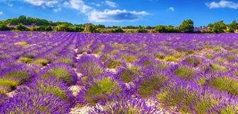 Lavendelfält i Provance Royaltyfri Foto
