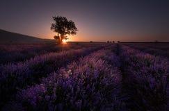 Lavendelfält nära Kazanlak, Bulgarien Arkivbilder