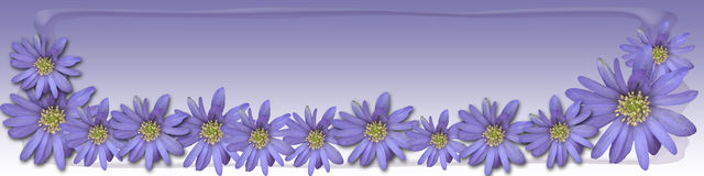 Lavendelfrühling Lizenzfreie Stockfotografie